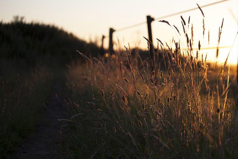 Grassesweb