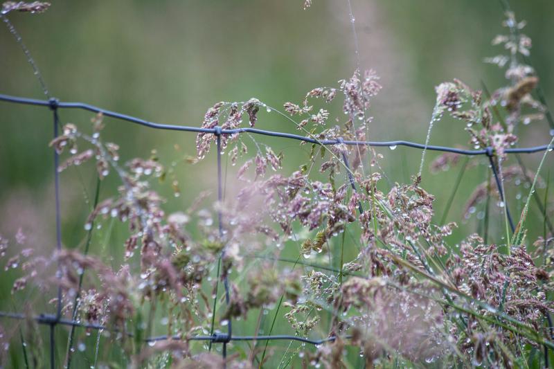 Wetgrasses