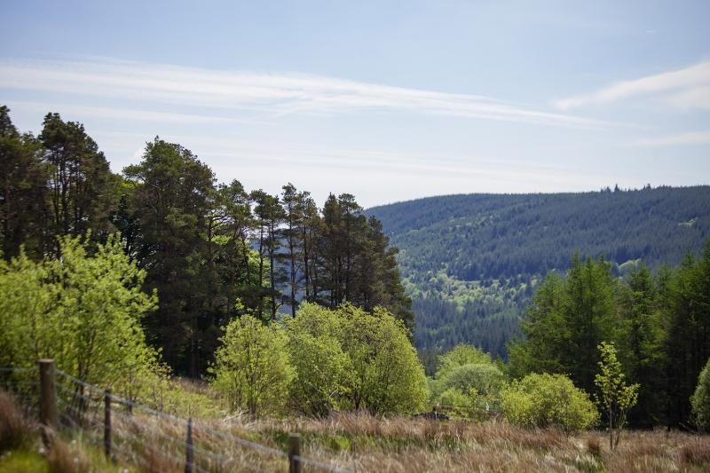 Foresthillresweb
