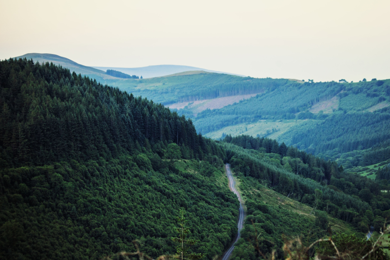 Forestroads