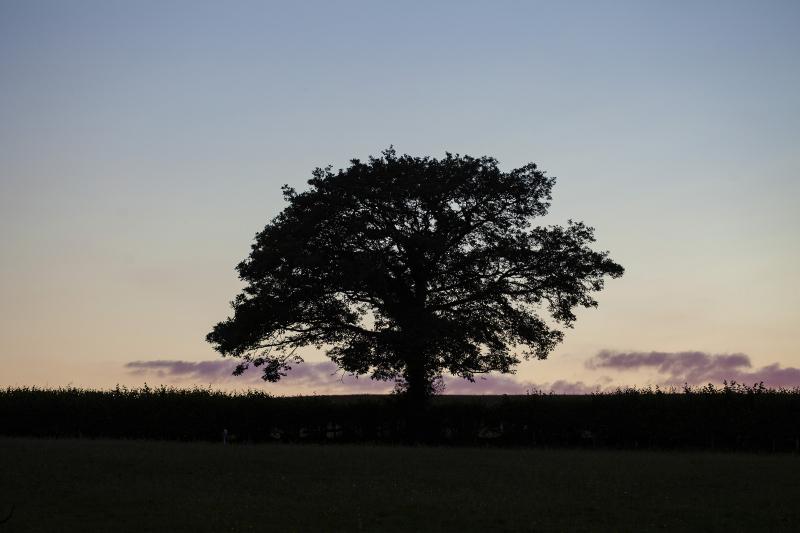 Treeatthetop8x10