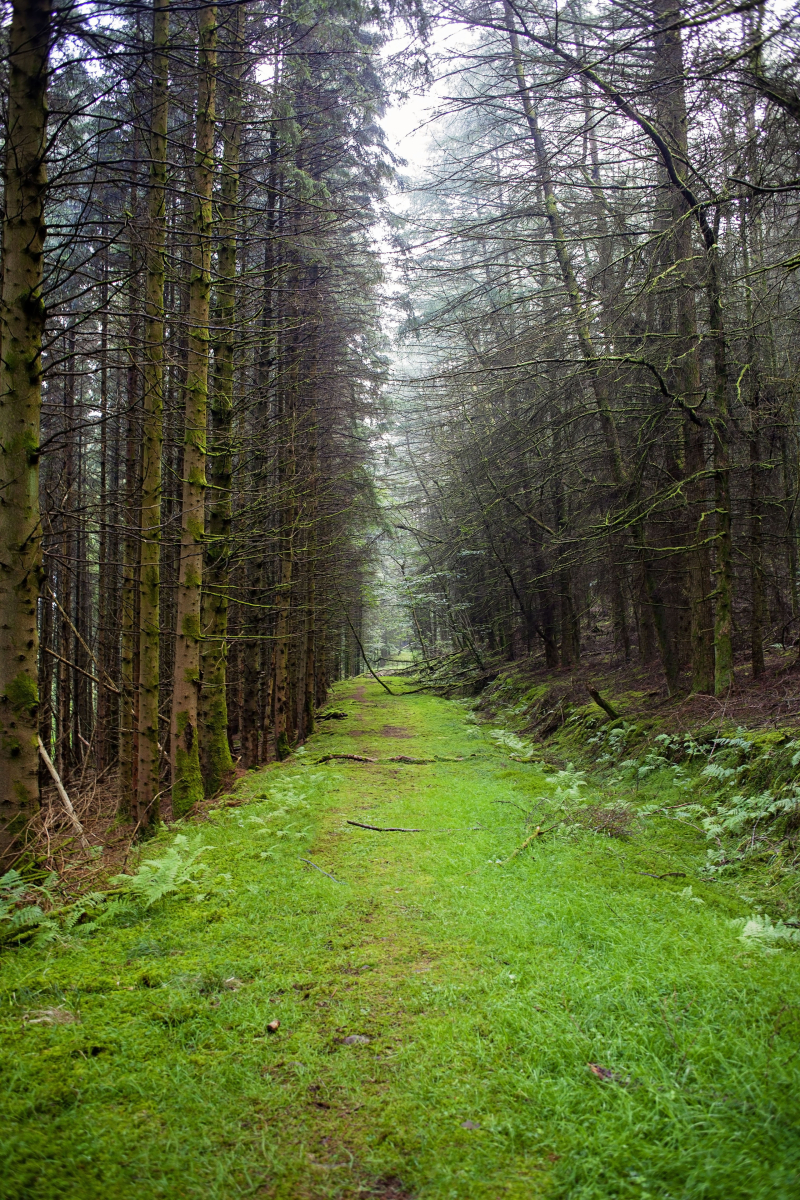 Forestmosspathsmaller