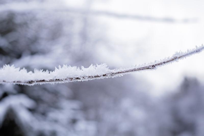 Snowcommon