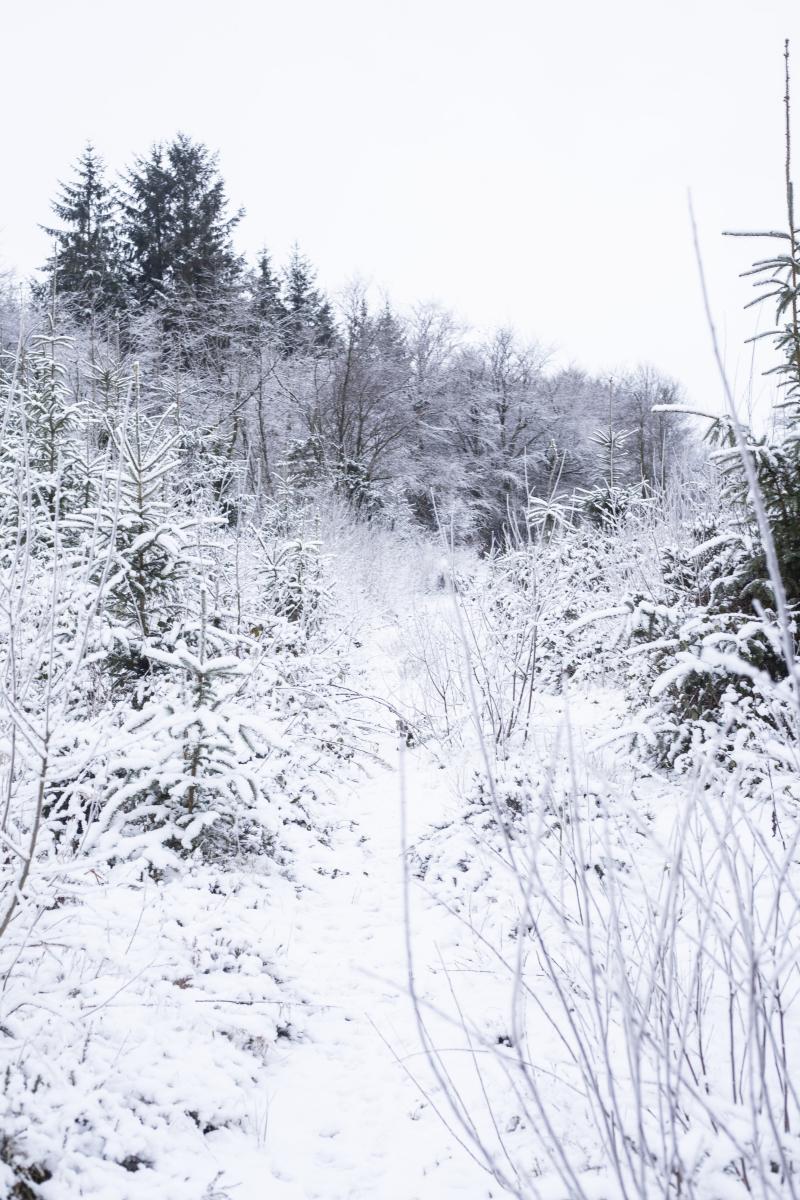 Snowhiddenpath