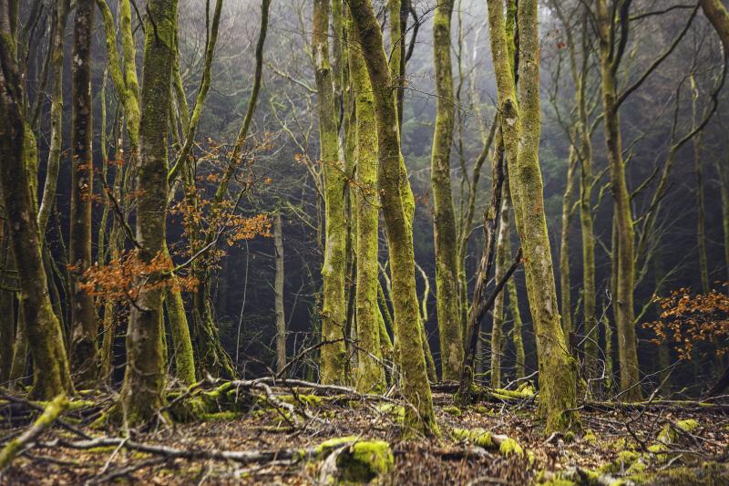 Beechtrees