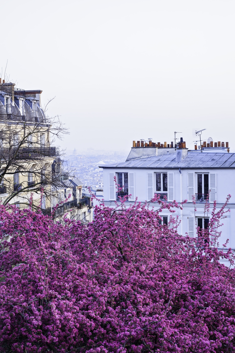 Blossomparis
