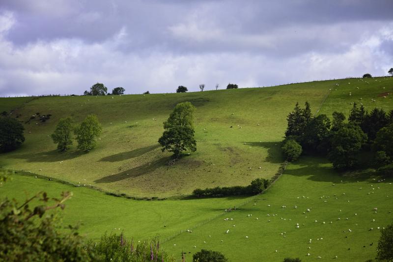 Oakhillside