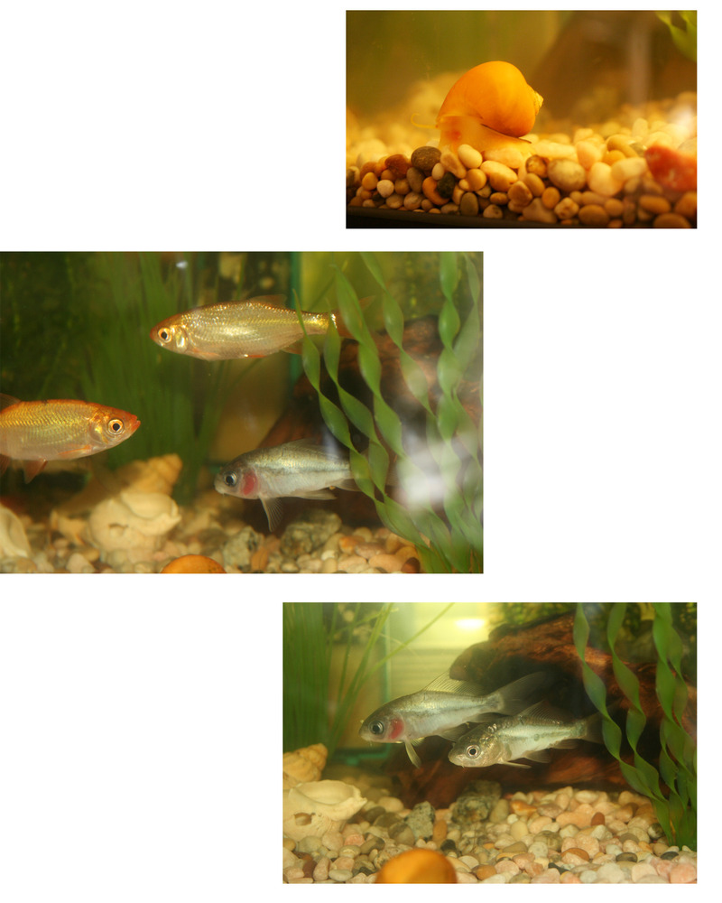 Fishiepics